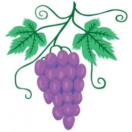 Vitis Vinifera - illustrations by Joren Eulalee for Shoots & Roots Bitters