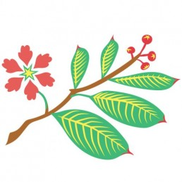 Lagerstroemia Speciosa - illustrations by Joren Eulalee for Shoots & Roots Bitters