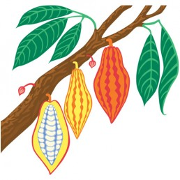 Theobroma Cacao - illustrations by Joren Eulalee for Shoots & Roots Bitters