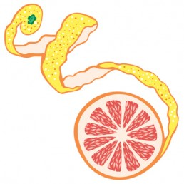 Citrus × Paradisi - illustrations by Joren Eulalee for Shoots & Roots Bitters