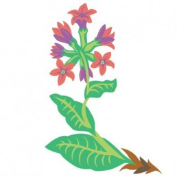 Pulmonaria Officinalis - illustrations by Joren Eulalee for Shoots & Roots Bitters