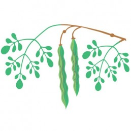 Moringa Oleifera illustrations by Joren Eulalee for Shoots & Roots Bitters