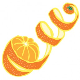 Citrus Sinensis illustrations by Joren Eulalee for Shoots & Roots Bitters
